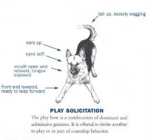 dog-play-posture