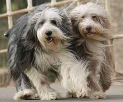 dogsinharmony