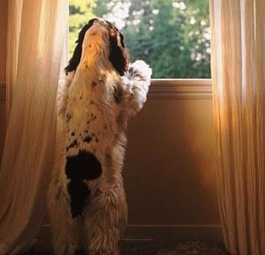 anxiousdog