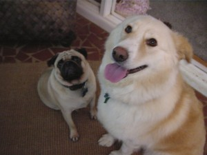 cancerdogs