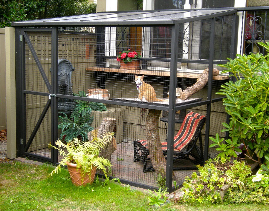 backyard spaces are the cat?s meow  Happy Walk Happy Dog Dog