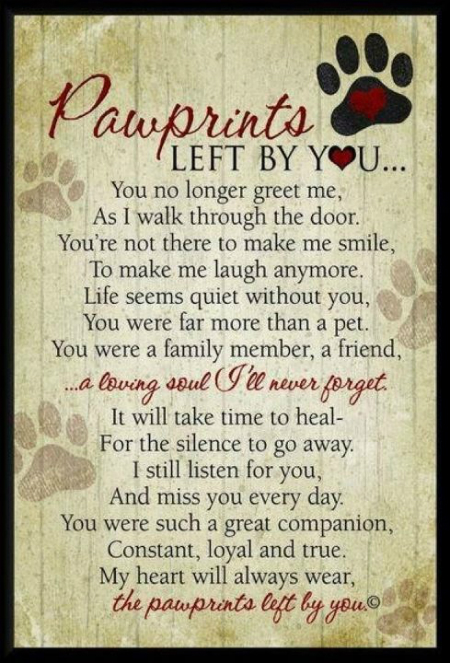 pawprints-quote_0